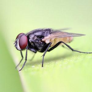 Засоби для боротьби з комахами